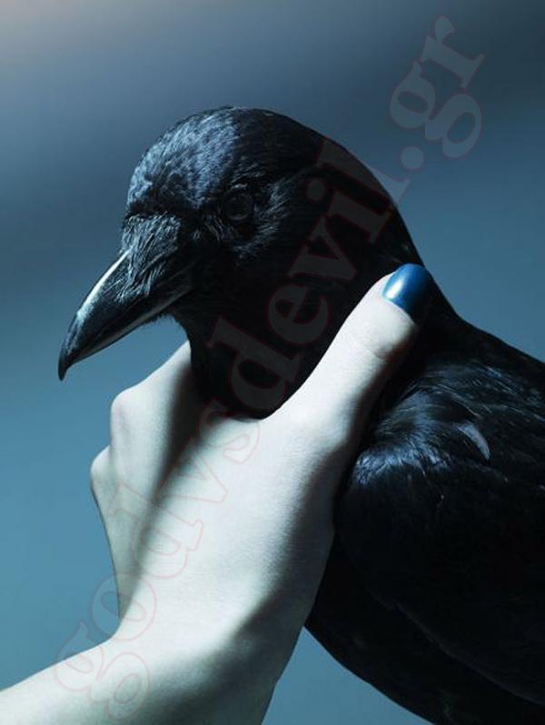 Δείξτε μου τις φωτογραφίες πουλί σας Γρήγορο λεσβιακό σεξ